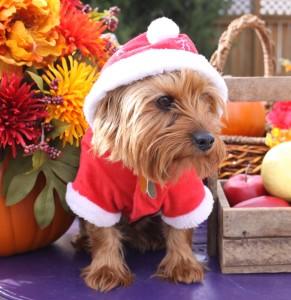 It's a Christmas Dog