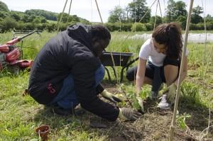 People planting seeds at social enterprise Mind Food